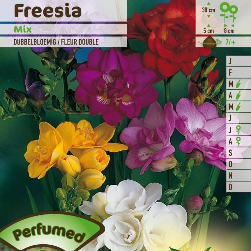 Freesia doble en mezcla