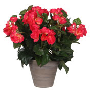 plante artificielle - begonia rose - mica