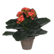 plante artificielle - kalanchoe orange - mica